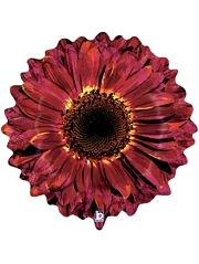 "24"" Burgundy Flower Autumn Balloon"